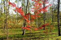 masyuen_autumn_1_0027