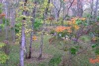 masyuen_autumn_1_0080