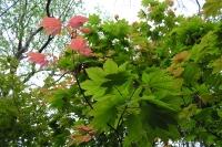 masyuen_autumn_1_0082