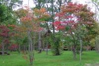 masyuen_autumn_1_0088