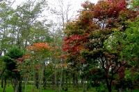 masyuen_autumn_1_0089