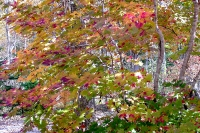 masyuen_autumn_1_0090