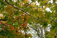 masyuen_autumn_1_0092