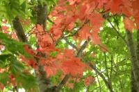 masyuen_autumn_1_0106