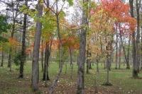 masyuen_autumn_1_0108