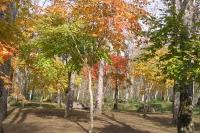 masyuen_autumn_1_0113