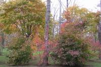masyuen_autumn_1_0114