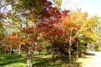 masyuen_autumn_2_0001