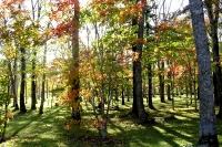 masyuen_autumn_2_0007