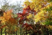 masyuen_autumn_2_0009