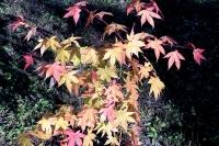 masyuen_autumn_2_0010