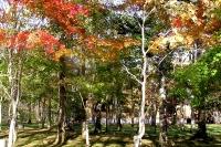 masyuen_autumn_2_0011