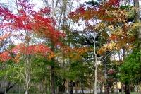 masyuen_autumn_2_0012