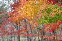 masyuen_autumn_2_0013