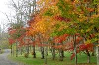 masyuen_autumn_2_0014
