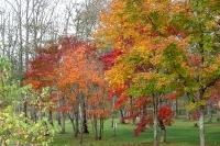 masyuen_autumn_2_0016