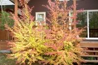 masyuen_autumn_2_0017