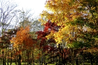masyuen_autumn_2_0019