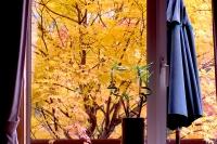 masyuen_autumn_2_0020