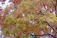 masyuen_autumn_2_0021