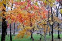 masyuen_autumn_2_0024