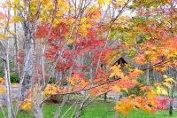 masyuen_autumn_2_0025