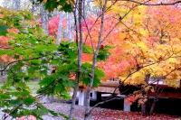 masyuen_autumn_2_0026