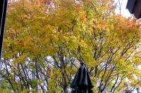 masyuen_autumn_2_0028