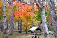 masyuen_autumn_2_0029