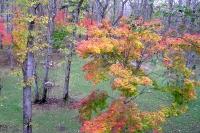 masyuen_autumn_2_0032