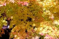 masyuen_autumn_2_0034