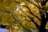 masyuen_autumn_2_0035