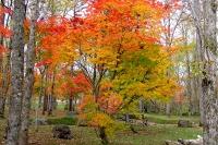 masyuen_autumn_2_0037