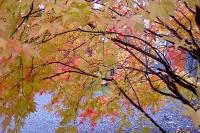 masyuen_autumn_2_0039
