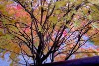 masyuen_autumn_2_0041