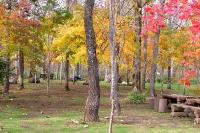 masyuen_autumn_2_0042