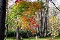 masyuen_autumn_2_0047