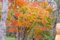 masyuen_autumn_2_0048