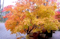masyuen_autumn_2_0051