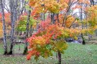 masyuen_autumn_2_0053