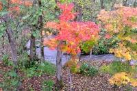 masyuen_autumn_2_0057
