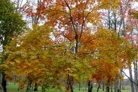 masyuen_autumn_2_0061