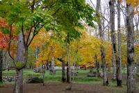 masyuen_autumn_2_0062