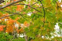 masyuen_autumn_2_0065