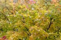 masyuen_autumn_2_0067