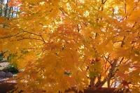 masyuen_autumn_2_0069