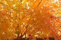masyuen_autumn_2_0070