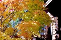 masyuen_autumn_2_0071