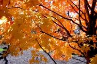 masyuen_autumn_2_0072