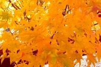 masyuen_autumn_2_0073